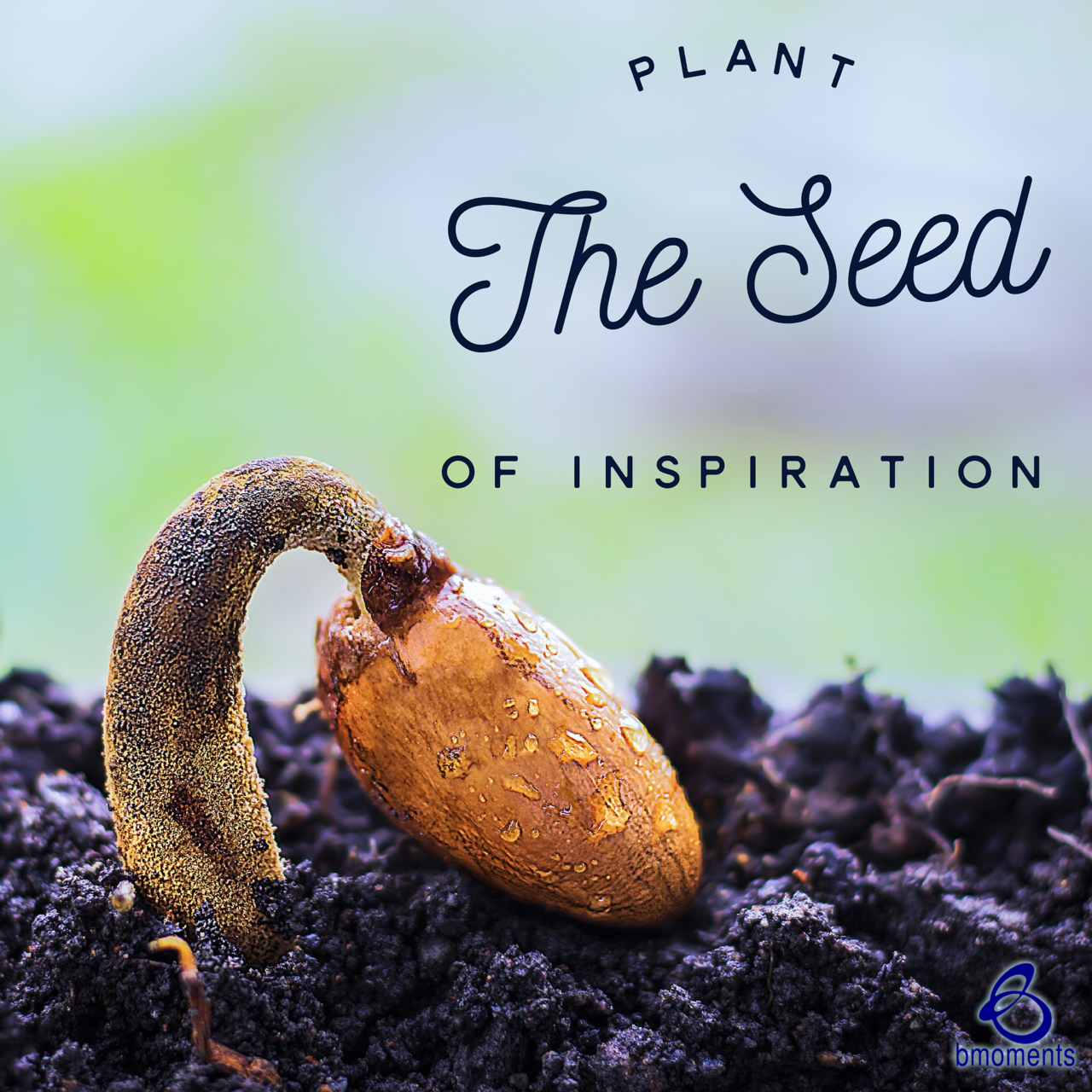 Use Your Words as Loving, Inspiring Seeds