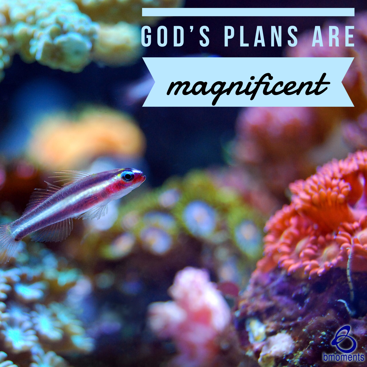 God's Plans Are Always Magnificently Orchestrated for You