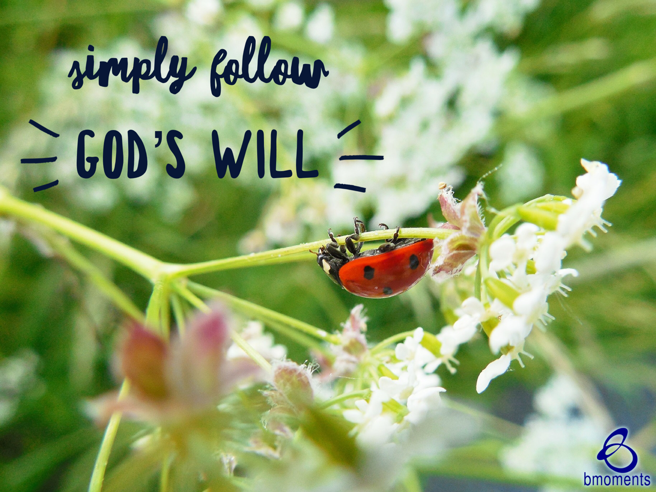 Choose God's Will Over Simply Fitting In