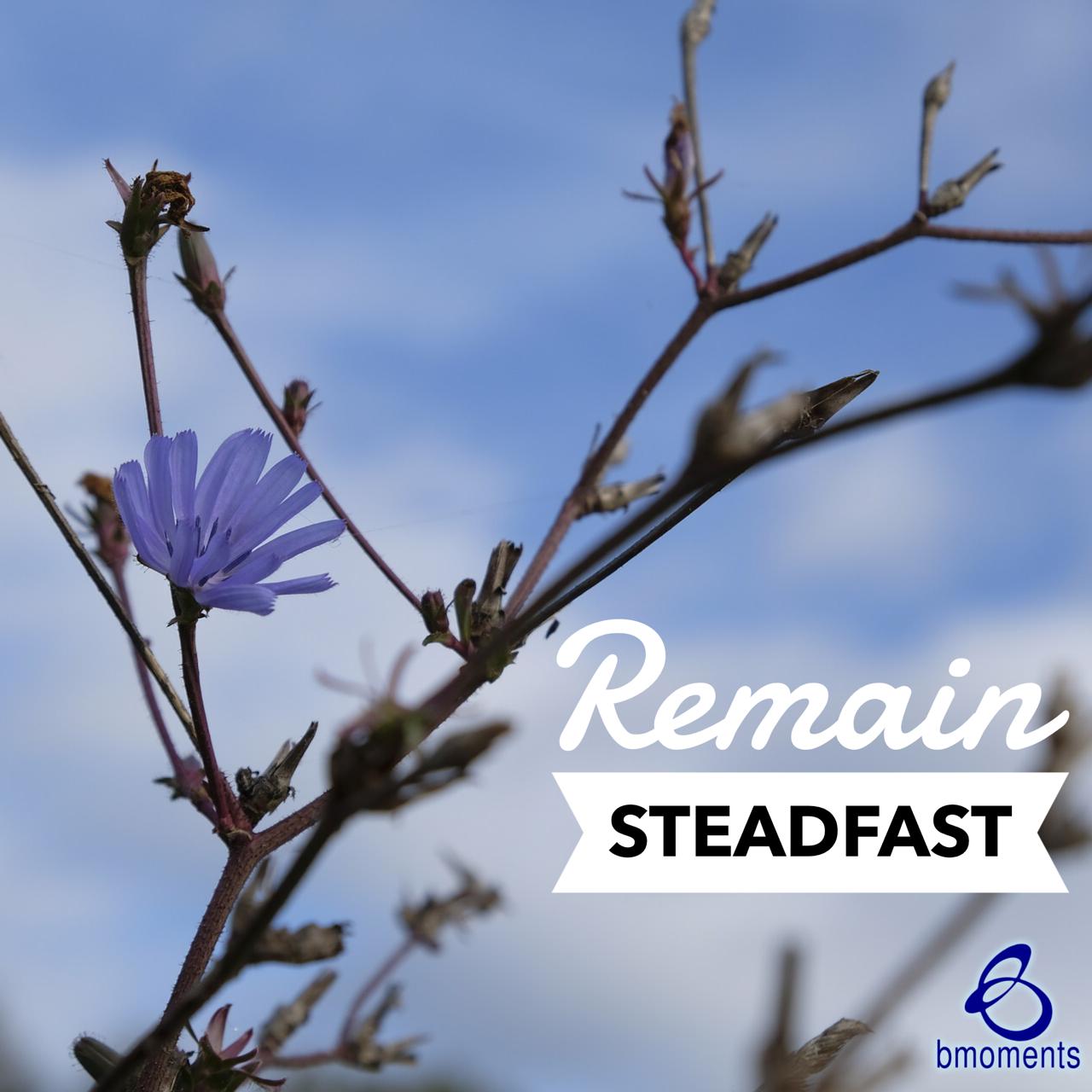 Remain Steadfast Despite Others' Disbelief