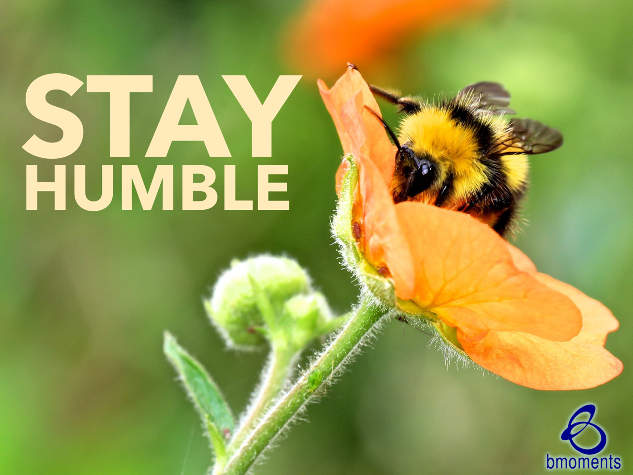 Your Humility Will Be Rewarded