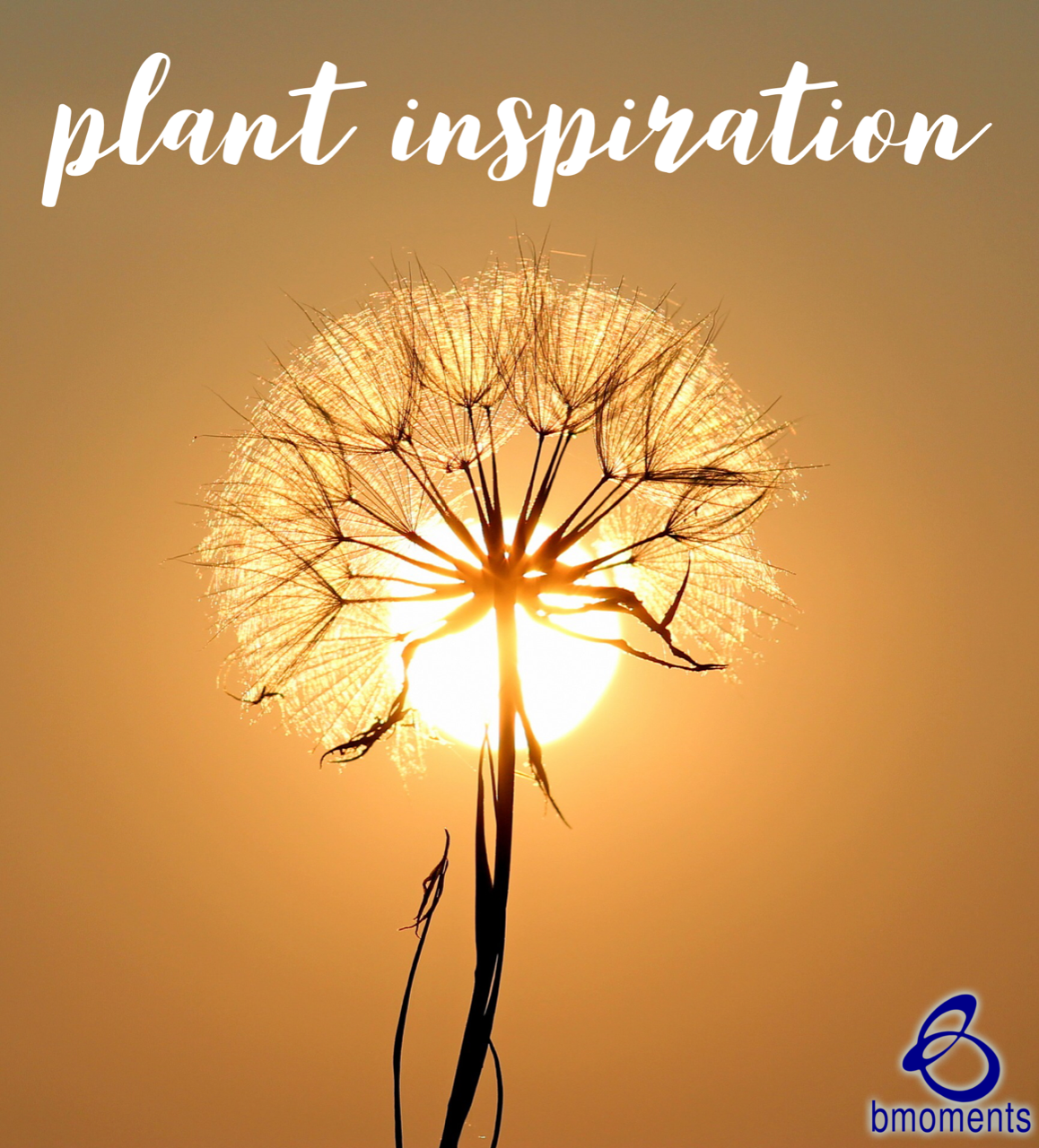 Speak into Their Destiny: Plants Seeds of Inspiration