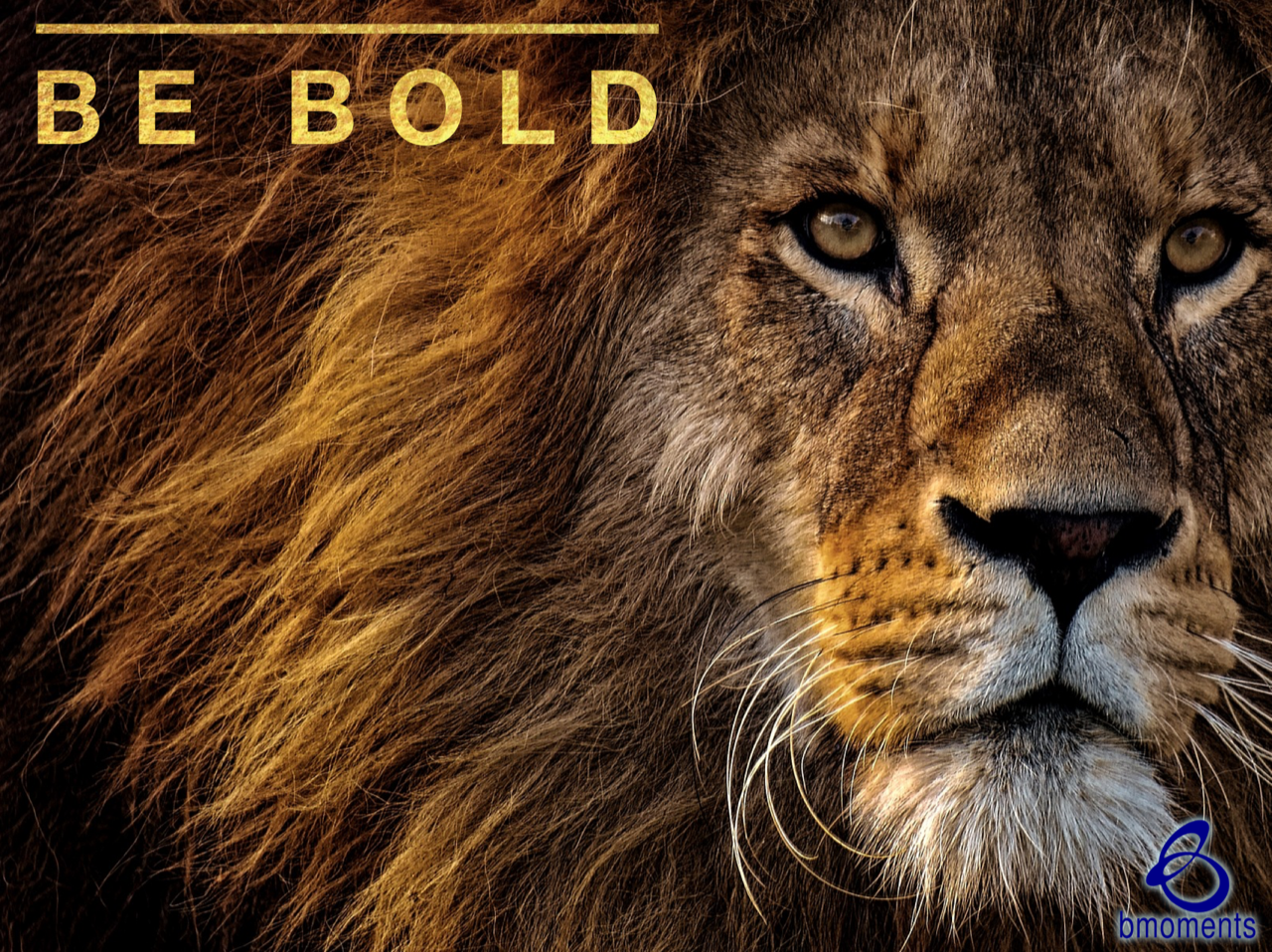 Be Bold as a Lion: Challenge the Status Quo