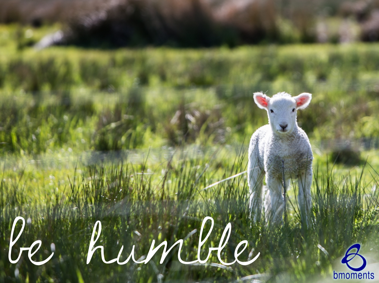 There's Power in Humility: Be Gentle as a Lamb