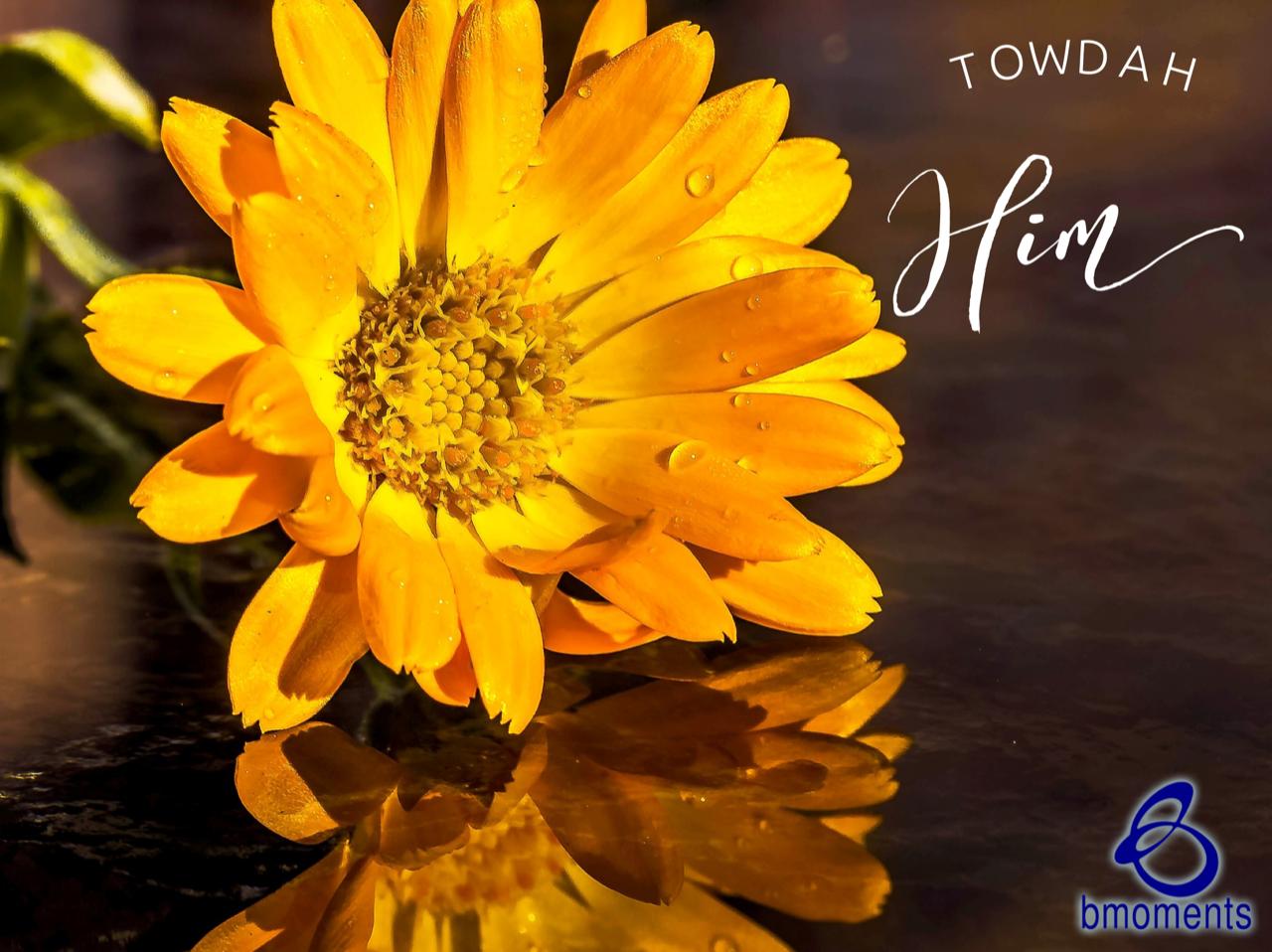 Towdah God: Praise Him for Blessings Not Yet Received