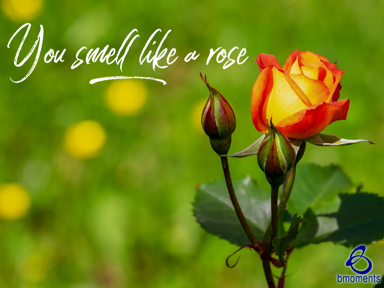 God Will Bring You out Smelling like a Rose