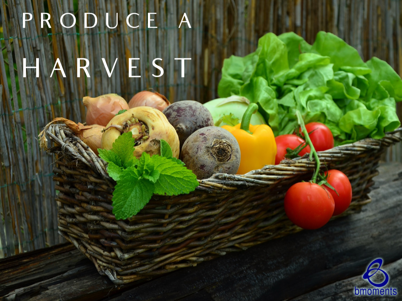 Is Your Seed Producing a Harvest?