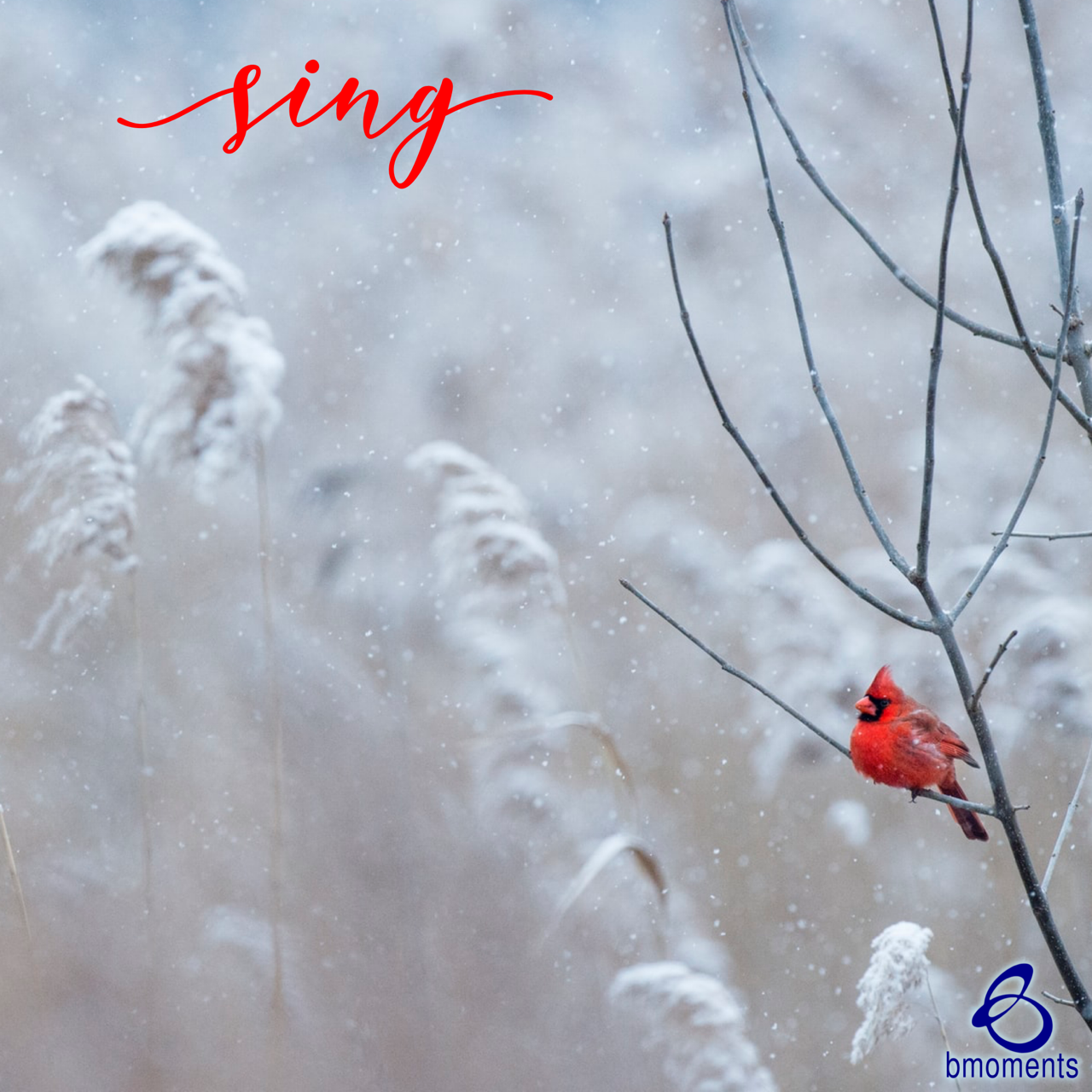 Sing Without a Song