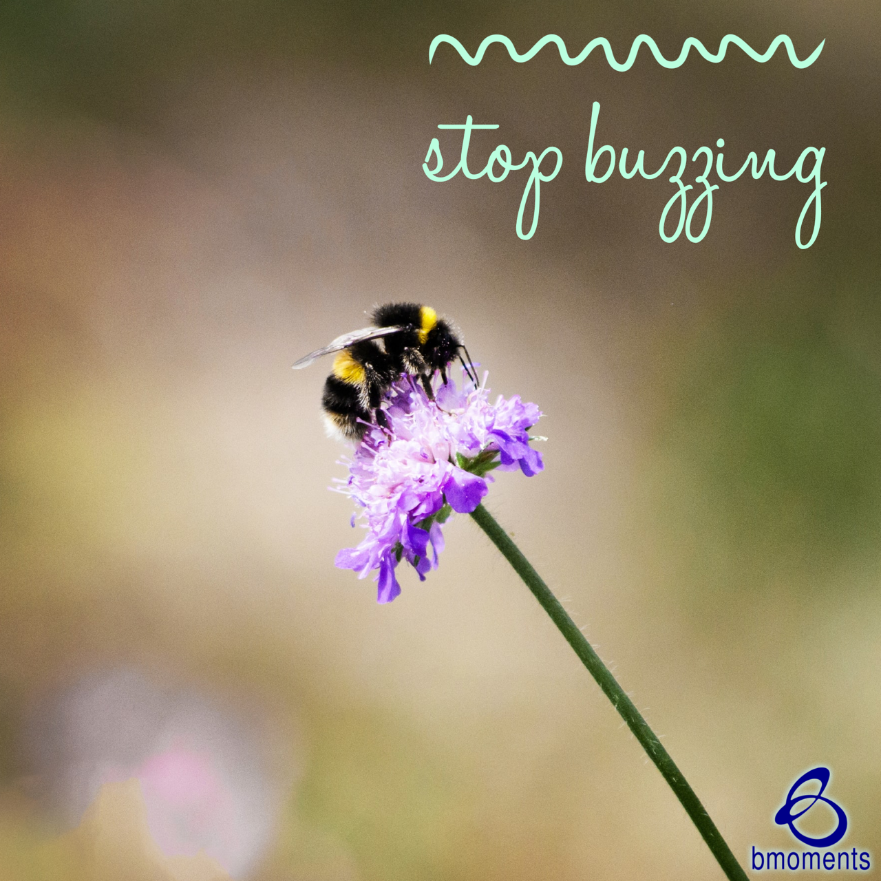 Stop Buzzing: Lay Down Your Stuff
